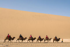 Camel caravan going through the sand dunes in the Gobi Desert, C Stock Photo