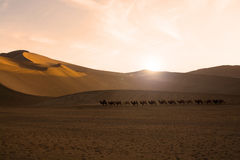 Camel caravan. Going through the sand dunes in the Gobi Desert, China Royalty Free Stock Images