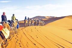 Camel caravan going through the sand dunes Royalty Free Stock Image