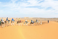 Camel caravan going through the sand dunes Stock Image
