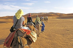 Camel caravan going through the sand dunes in the Sahara. Africa Royalty Free Stock Photo