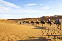 Camel caravan going through the sand dunes in the Sahara Desert, Stock Photography