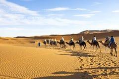Camel caravan going through the sand dunes in the Sahara Desert, Morocco. stock photography