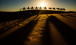 Camel Caravan. Going through the sand dunes in the Sahara Desert, Morocco Stock Images