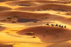 Camel Caravan. Going through the sand dunes in the Sahara Desert, Morocco Stock Photos