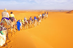 Camel caravan going through the sand dunes in the Sahara Desert Royalty Free Stock Images