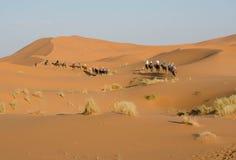 Camel caravan going through the sand dunes Royalty Free Stock Photo