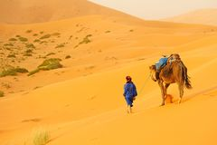 Camel caravan going through the sand dunes in the Sahara Desert. Morocco Africa. Beautiful sand dunes in the Sahara desert Stock Image