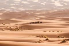 Camel caravan going through the sand dunes in the Sahara Desert. Morocco Africa. Beautiful sand dunes in the Sahara Stock Photos