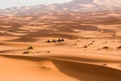 Camel caravan going through the sand dunes in the Sahara Desert. Morocco Africa. Beautiful sand dunes in the Sahara Stock Photography