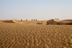 Camel Caravan Horizon Sand dunes Foreground Blue Sky. Carvan of camels and People on foot in evening light seen along the horizon with sand dunes in foreground Royalty Free Stock Photos