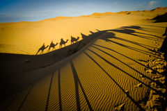 Camel Caravan In The Sahara Desert Royalty Free Stock Images