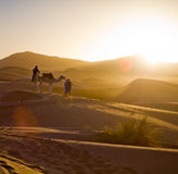 Camel Caravan In The Sahara Desert Royalty Free Stock Photography
