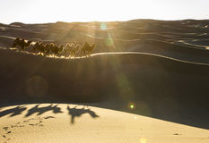 Camel caravan & Its Shadows Royalty Free Stock Images