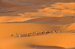 Camel caravan in Merzouga desert Stock Photos