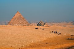 Camel caravan moving to the pyramid Royalty Free Stock Image