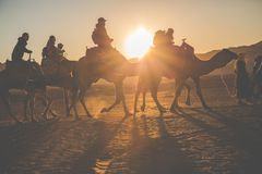 Camel caravan with people going through the sand dunes in the Sa Royalty Free Stock Images