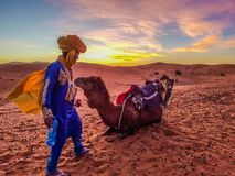 Camel caravan resting on sand dunes of Sahara desert and a man standing in front of camel, wearing traditional, cultural blue cost stock photos