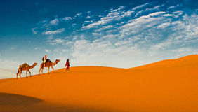 Camel caravan in the sahara desert Stock Image