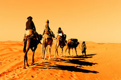 Camel Caravan in the Sahara Desert Stock Photography