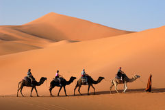Camel Caravan in the Sahara Desert. Camel caravan going through the sand dunes in the Sahara Desert, Morocco stock photo