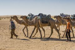Camel caravan in the sahara desert Royalty Free Stock Images