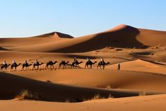 Camel caravan in Sahara desert. Stock Images