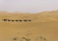 Camel caravan in the sahara desert. Camel caravan going through the sand dunes in the Sahara Desert, Morocco Royalty Free Stock Photo
