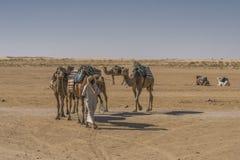 Camel caravan in the sahara desert stock photos