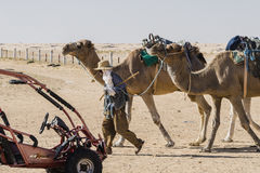Camel caravan in the sahara desert Stock Images