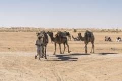 Camel caravan in the sahara desert Stock Images