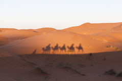 Camel caravan at sahara desert, Morocco Royalty Free Stock Images