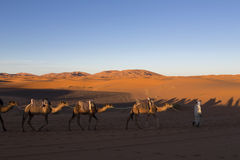 Camel caravan on the Sahara desert in profile Royalty Free Stock Image