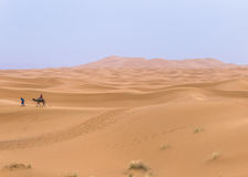 Camel caravan in the sahara desert royalty free stock photos