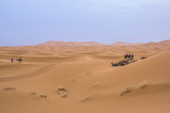 Camel caravan in the sahara desert Royalty Free Stock Photos