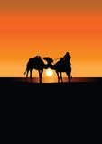 Camel caravan in Sahara at sunset Stock Photo