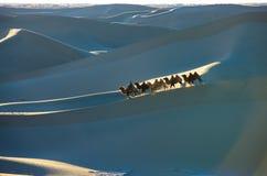 Camel caravan &  sand dunes Royalty Free Stock Image