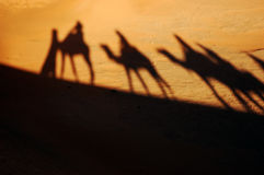Camel caravan shadows. In the morning desert Stock Photography