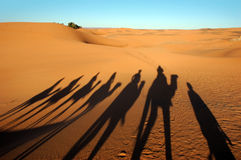 Camel caravan shadows. In the morning desert Royalty Free Stock Photography