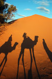 Camel caravan shadows. In the morning desert Stock Photo