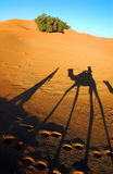 Camel caravan shadows. In Sahara desert Stock Photo
