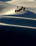 Camel Caravan silhouette. Through the sand dunes in the Tarim Desert, China Stock Photo