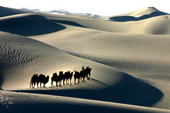 Camel Caravan silhouette. Through the sand dunes in the Tarim Desert, China Royalty Free Stock Image