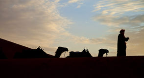 Camel caravan sillhouette Royalty Free Stock Photography
