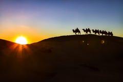 Camel caravan &  sunset Stock Photos