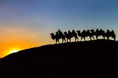 Camel caravan & Sunset Royalty Free Stock Photography