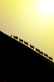 Camel caravan with sunset Royalty Free Stock Photography