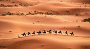 Camel caravan  Royalty Free Stock Images