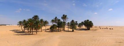 Camel caravan in Tunisia. Camel caravan heading to oasis in desert Royalty Free Stock Photography
