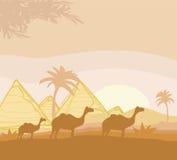 Camel caravan in wild africa landscape illustration Stock Photography